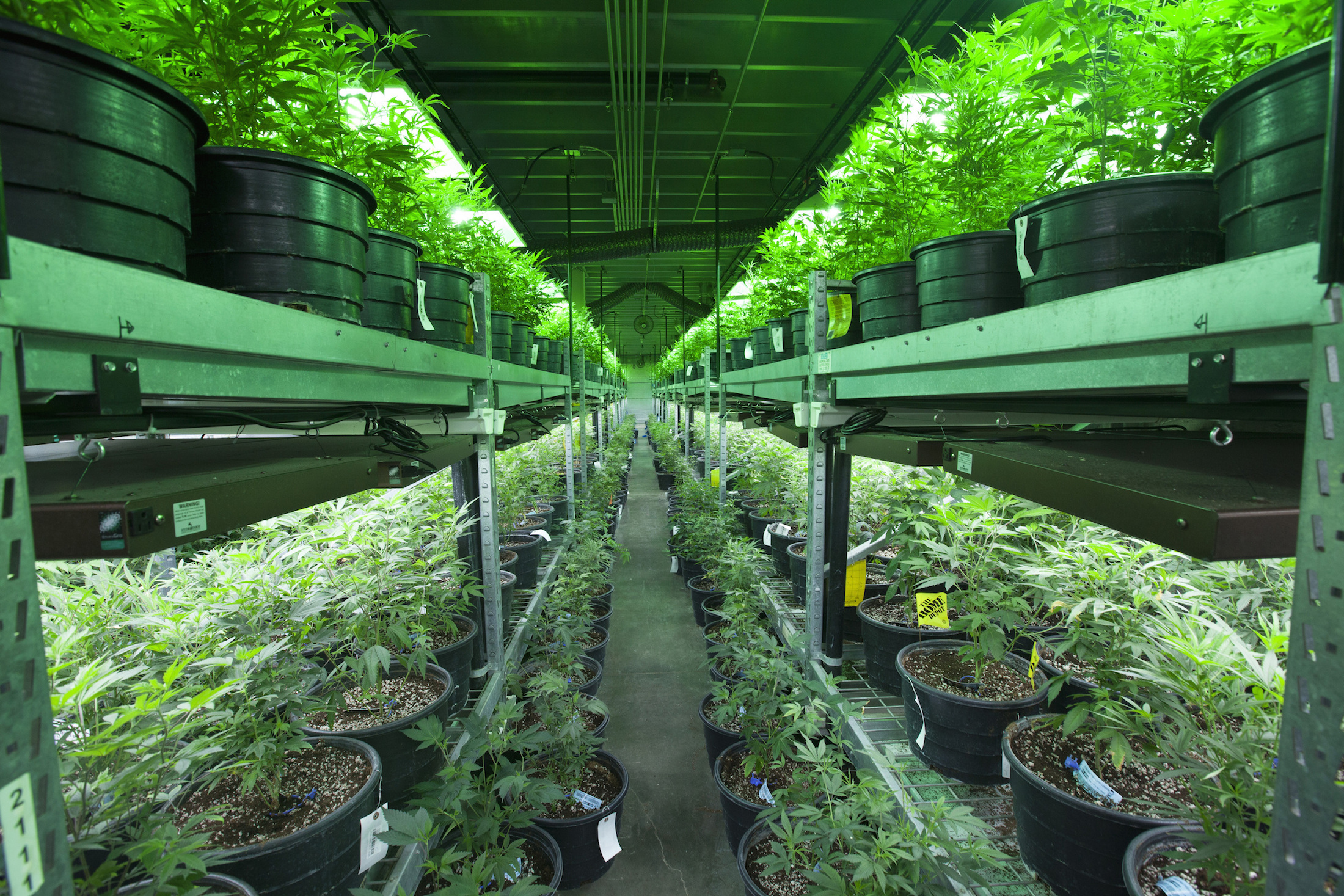 Reefer Property Madness – Denver's Marijuana Industry Totals 3.7M Sq. Ft.; Prices Triple For Obsolete Buildings – This Could Happen In A City Near You